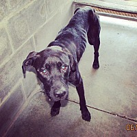 Adopt A Pet :: Coca - Haines City, FL