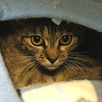 Adopt A Pet :: Trinka - New Milford, CT