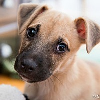 Adopt A Pet :: Harrison - Wethersfield, CT