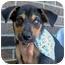 Photo 1 - Husky/Hound (Unknown Type) Mix Puppy for adoption in Powell, Ohio - Zac