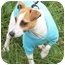 Photo 1 - Fox Terrier (Smooth) Dog for adoption in Gallatin, Tennessee - Zack