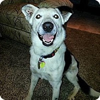 Adopt A Pet :: Frisco - Edmond, OK