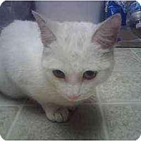 Adopt A Pet :: Aspri - Scottsdale, AZ