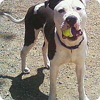 Adopt A Pet :: McGee - Toledo, OH