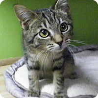 Adopt A Pet :: Christmas - Dover, OH