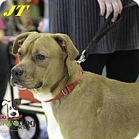 Adopt A Pet :: JT - Alpharetta, GA