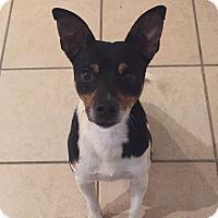 Adopt A Pet :: Chip - Alpharetta, GA