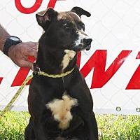 Adopt A Pet :: Happy - Grayson, LA