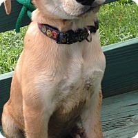 Adopt A Pet :: Serena - Pleasant Plain, OH