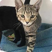 Adopt A Pet :: Clover - Orleans, VT