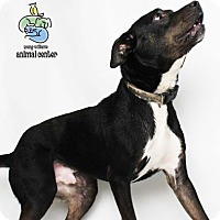 Adopt A Pet :: Diesel - Knoxville, TN