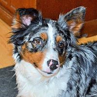 Adopt A Pet :: Miss Sassy - Minerva, OH