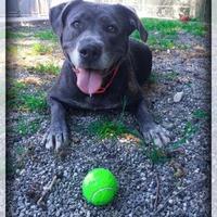 Adopt A Pet :: Mila - Camano Island, WA