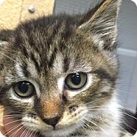Adopt A Pet :: Alvina - LaJolla, CA