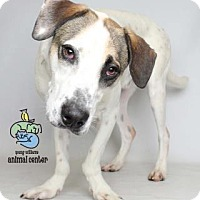 Adopt A Pet :: Caden - Knoxville, TN