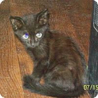 Adopt A Pet :: Kit - Mexia, TX
