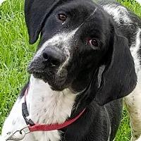 Adopt A Pet :: Danni - Wilmington, DE