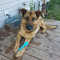 Adopt A Pet :: Lynch (Marshawn) - Seattle, WA
