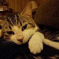 Adopt A Pet :: Liam - Greensburg, PA