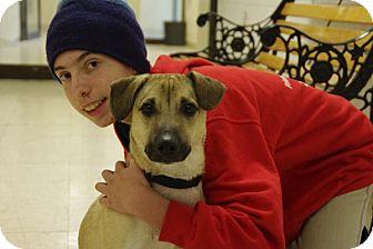 Corgi Mix Dog for adoption in Elyria, Ohio - Milo-Prison Graduate