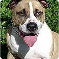 Adopt A Pet :: Addante - Hoffman Estates, IL