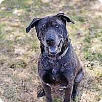 Adopt A Pet :: TROY - Coudersport, PA