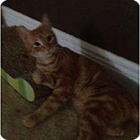 Adopt A Pet :: Goldielocks - Mobile, AL