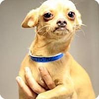 Adopt A Pet :: Olivier - Phoenix, AZ
