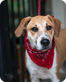 Terrier (Unknown Type, Medium) Mix Dog for adoption in Baton Rouge, Louisiana - Eva