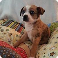 Adopt A Pet :: Babette - Knoxville, TN