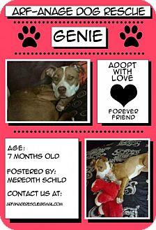 Pit Bull Terrier Mix Dog for adoption in Phoenix, Arizona - Genie