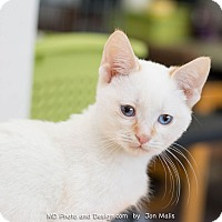 Adopt A Pet :: Flame - Fountain Hills, AZ