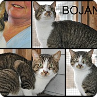 Adopt A Pet :: Bojangles - Delmont, PA