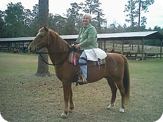Tennessee Walking Horse/Appaloosa Mix for adoption in Cantonment, Florida - Firecracker