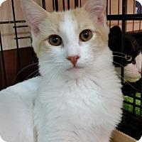 Adopt A Pet :: Carson (KV) - Little Falls, NJ
