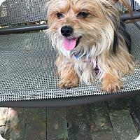 Adopt A Pet :: Barney - Leesburg, FL