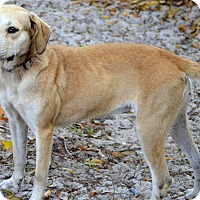 Adopt A Pet :: Deedee - Okeechobee, FL