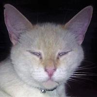 Adopt A Pet :: Angel - Goldsboro, NC