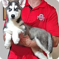Adopt A Pet :: Skye - South Euclid, OH