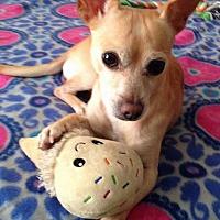 Adopt A Pet :: Chance - Seattle, WA