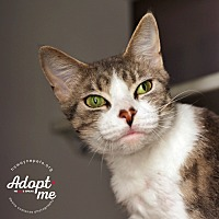 Adopt A Pet :: Victoria - Lyons, NY