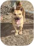 Terrier (Unknown Type, Small) Mix Dog for adoption in Sacramento, California - Tucker