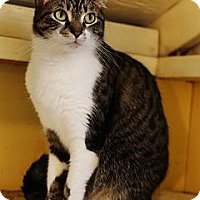 Adopt A Pet :: Maya - Redondo Beach, CA