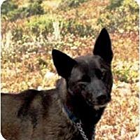 Adopt A Pet :: Isis - YERINGTON, NV