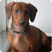 Adopt A Pet :: Tazz and Daisy - Warren, NJ