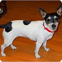 Adopt A Pet :: Sally Little Soul - Oklahoma City, OK