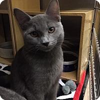 Adopt A Pet :: Marly - McDonough, GA
