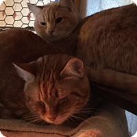 Adopt A Pet :: Peanut & Louey - Sanford, ME
