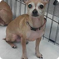 Adopt A Pet :: Lulu - House Springs, MO