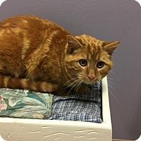 Adopt A Pet :: Roman - Medina, OH